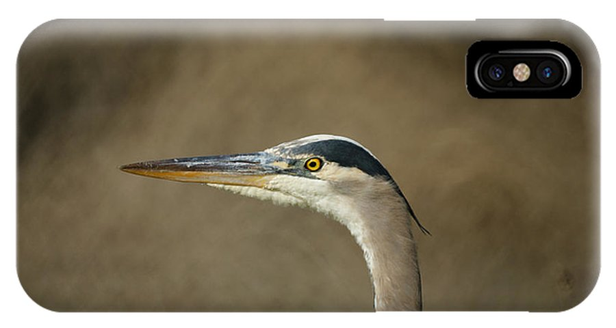 Animals IPhone X Case featuring the photograph Great Blue Heron Profile by Ernie Echols