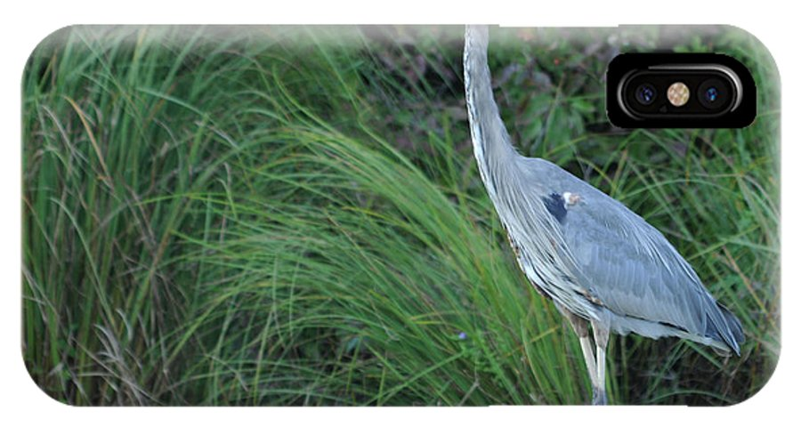 Bird IPhone X Case featuring the photograph Great Blue Heron by Ronald Grogan