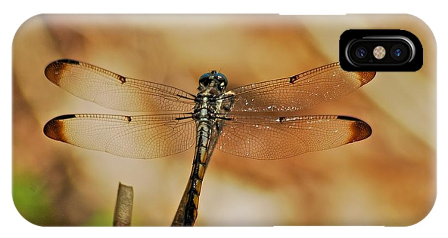 Blue IPhone X Case featuring the photograph Great Blue Skimmer 8703 3326 by Michael Peychich