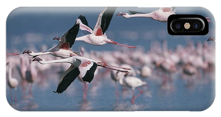 Africa IPhone X / XS Case featuring the photograph Greater Flamingos In Flight Over Lake by Roy Toft