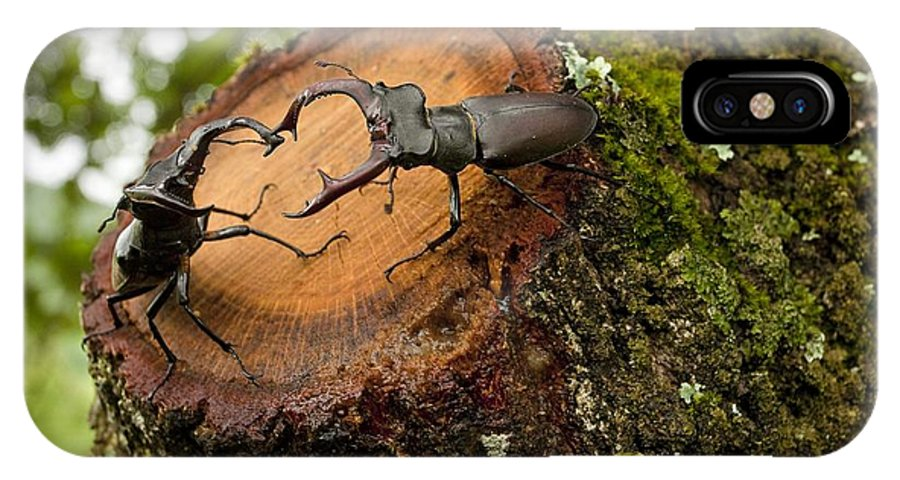 Male IPhone X / XS Case featuring the photograph Greater Stag Beetles by Bob Gibbons