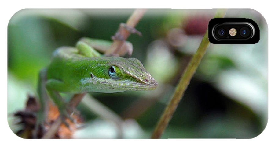 Lizard IPhone X / XS Case featuring the photograph Green Anole by Kay Lovingood