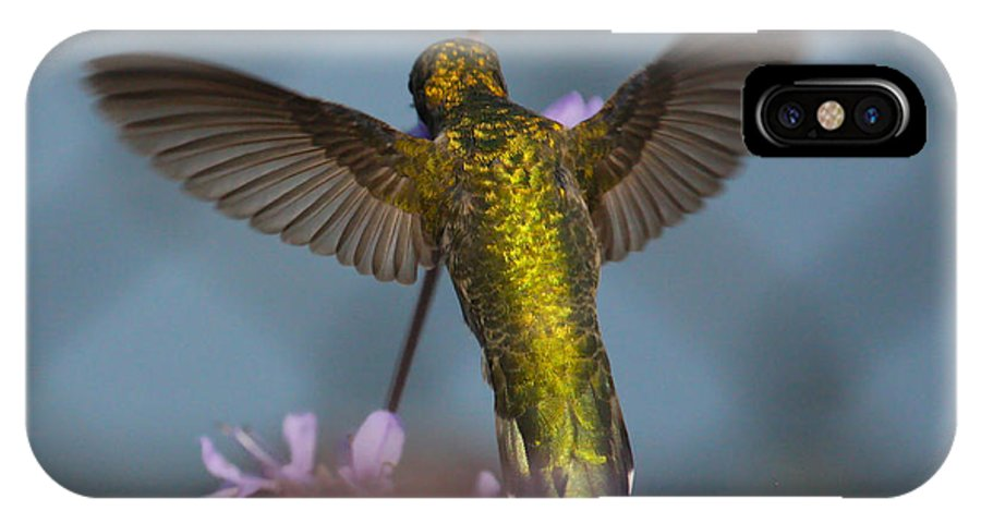 Hummingbird Photos IPhone X / XS Case featuring the photograph Green Cross by Paul Marto