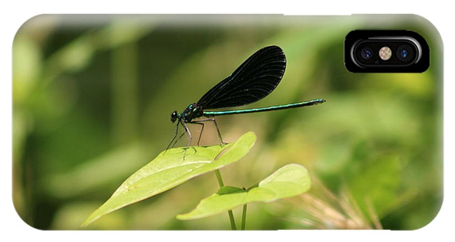 Dragonfly IPhone X Case featuring the photograph Green Dragonfly by Christopher Hignite