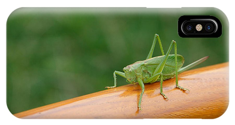 Animal IPhone X Case featuring the photograph Green Grasshopper by Tilen Hrovatic