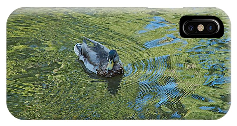 Duck IPhone X Case featuring the photograph Green Pool by Joseph Yarbrough