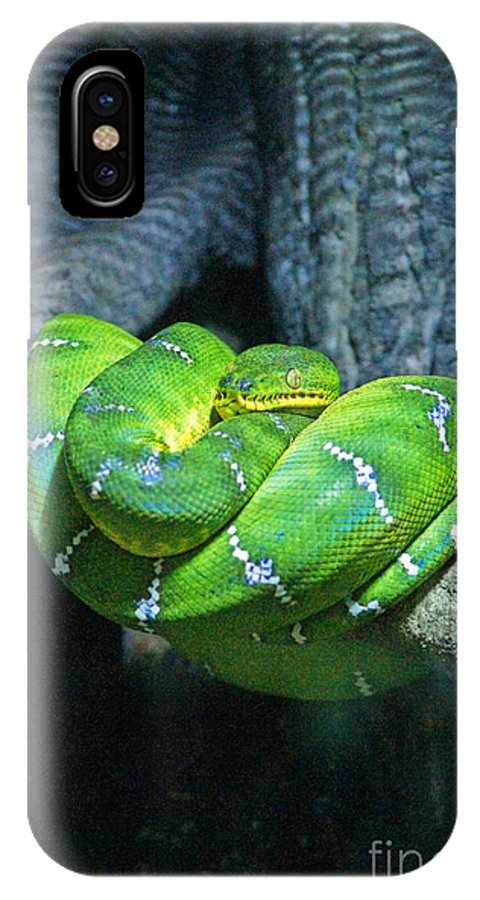 Snakes IPhone X / XS Case featuring the photograph Green Snake by Randy Harris