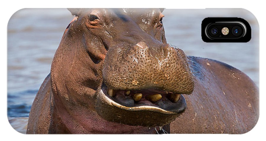Africa IPhone X Case featuring the photograph Grinning Hippo by George Cathcart