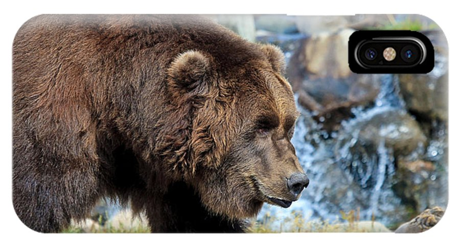 Grizzly IPhone X Case featuring the photograph Griz by Athena Mckinzie