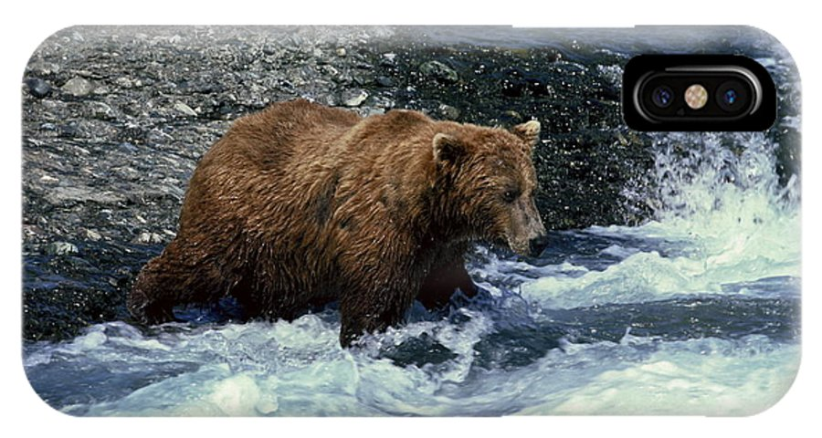 Grizzly Bear Fishing IPhone X Case featuring the photograph Grizzly Bear Fishing by Sally Weigand