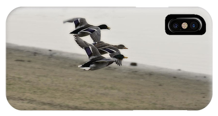Ducks In Flight IPhone X / XS Case featuring the photograph Grouping V2 by Douglas Barnard