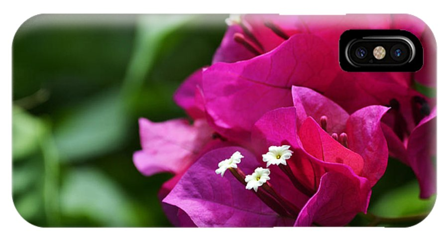 Bougainvillea IPhone X Case featuring the photograph Growing Up by Melanie Moraga