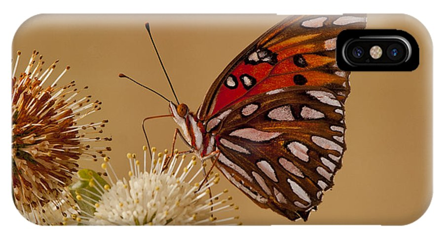 #gulf #frittilary #frittalary #butterfly #butterflies #wings #flutter #milk #weed #milkweed #patricia #montgomery IPhone X Case featuring the photograph Gulf Frittilary by Patricia Montgomery