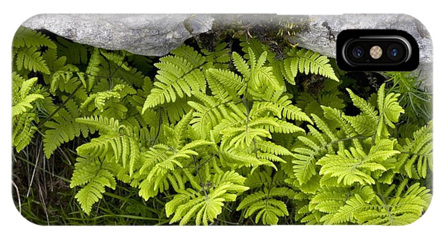 Limestone Fern IPhone X / XS Case featuring the photograph Gymnocarpium Robertianum by Bob Gibbons