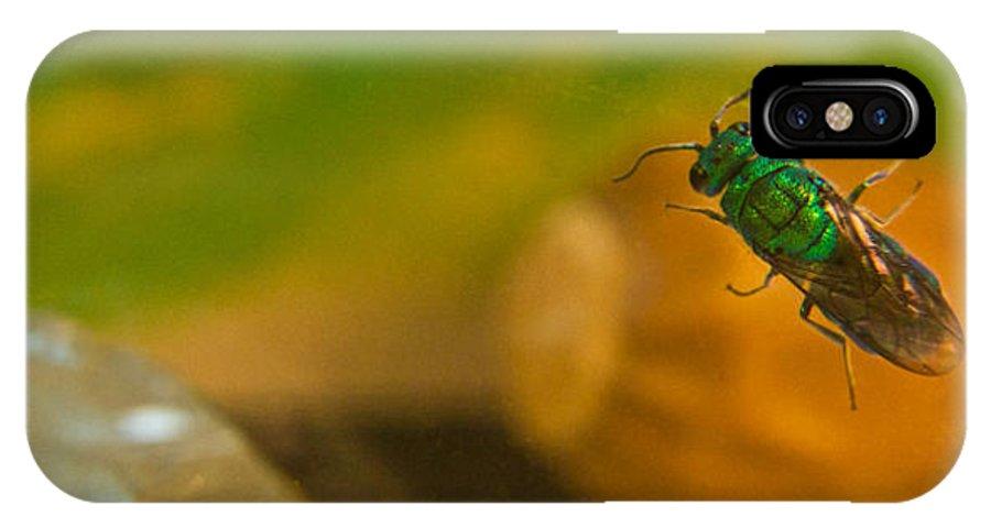 Halictid IPhone X / XS Case featuring the photograph Halicid Bee 6 by Douglas Barnett