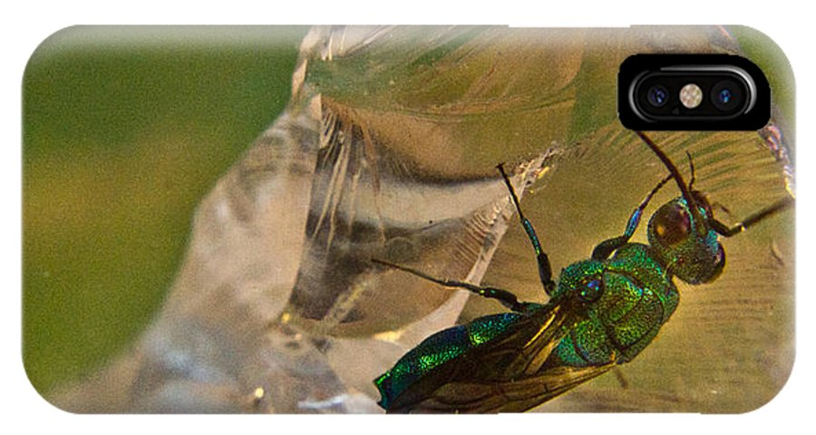 Wasp IPhone X / XS Case featuring the photograph Halicid Bee 8 by Douglas Barnett