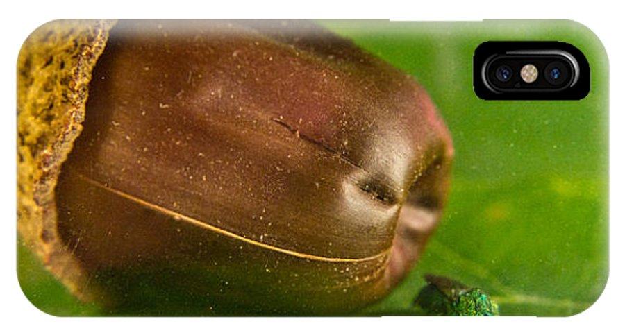 Halictid IPhone X / XS Case featuring the photograph Halicid Bee by Douglas Barnett