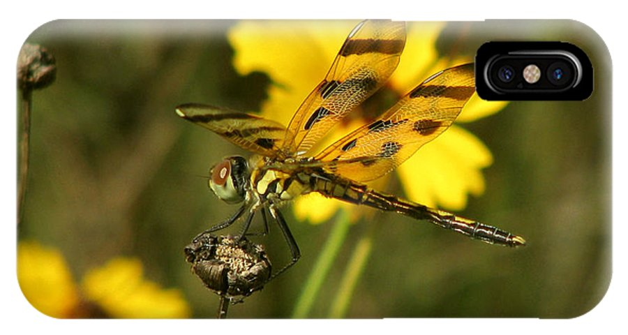 Nature IPhone X Case featuring the photograph Halloween Pennant by Peg Urban