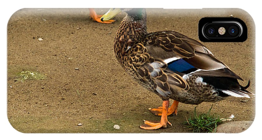 IPhone X Case featuring the photograph Handsome Mallard by Douglas Barnett