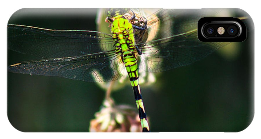Dragonfly IPhone X Case featuring the photograph Hangin On by Toma Caul