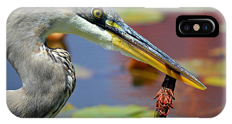 Great Blue Heron IPhone X Case featuring the photograph Hanging By A Tail by Fraida Gutovich