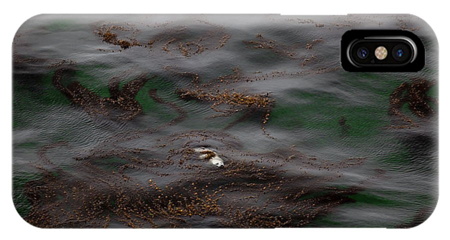 Harbor Seals IPhone X Case featuring the photograph Harbor Seal In Kelp Bed by Karen Ulvestad