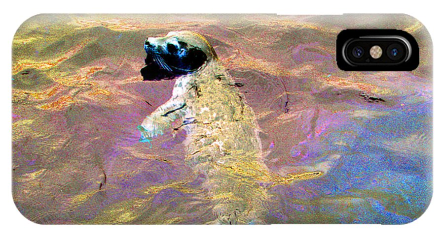 Seals IPhone X Case featuring the photograph Harbor Seal by Marie Jamieson