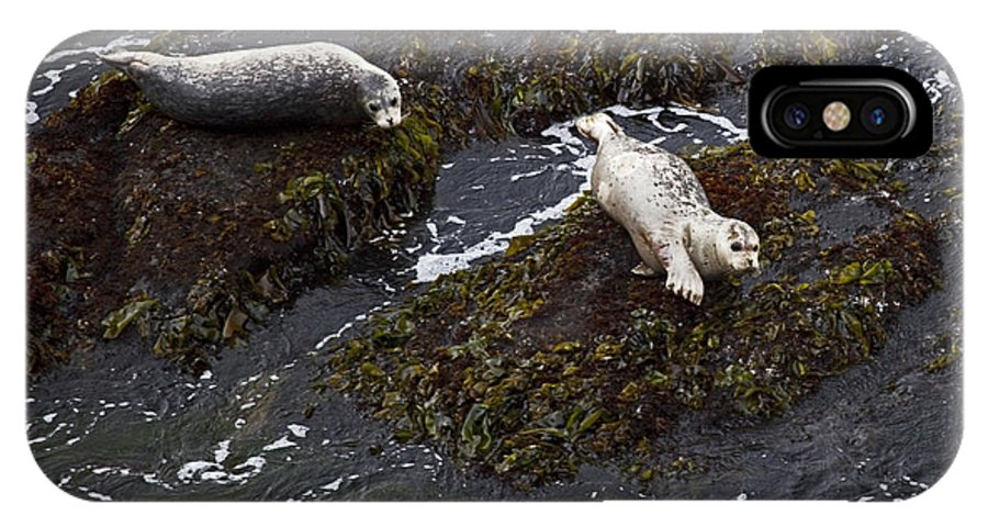 Nature IPhone X Case featuring the photograph Harbor Seals by Karen Ulvestad