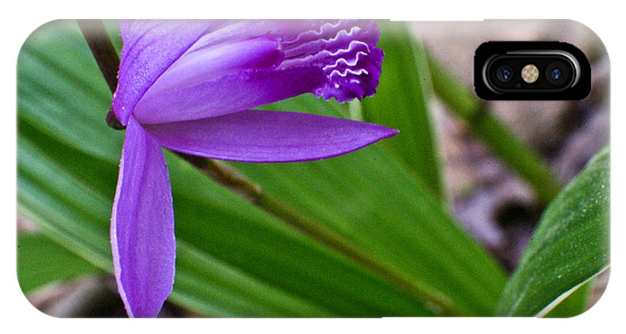 Orchidaceae IPhone X Case featuring the photograph Hardy Orchid 3 by Douglas Barnett