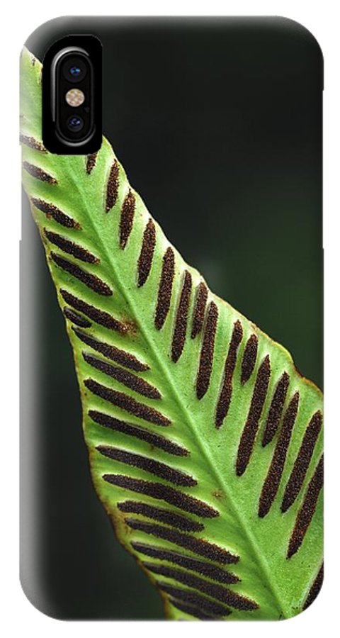 Phyllitis Scolopendrium IPhone X / XS Case featuring the photograph Hart's Tongue Fern by Colin Varndell