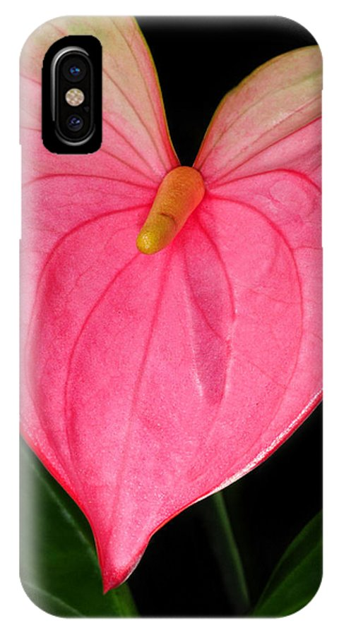 Calla Lily IPhone X Case featuring the photograph Have A Heart by Dave Mills