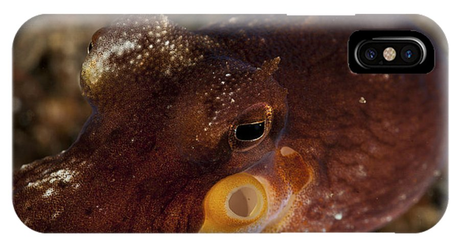 Cephalopod IPhone X Case featuring the photograph Head Shot Of A Brownish Red Coconut by Mathieu Meur