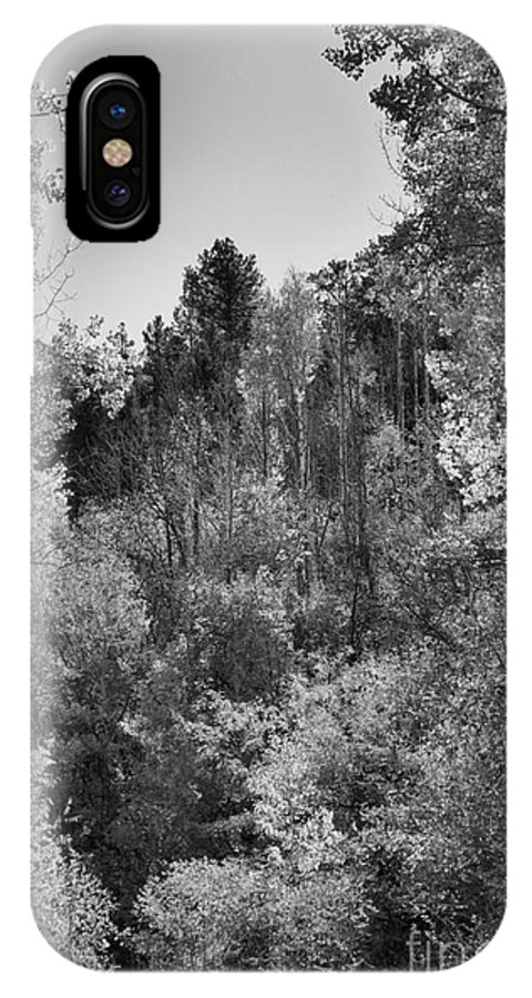 Photograph IPhone X Case featuring the photograph Heart Of The Aspen Forest by Vicki Pelham