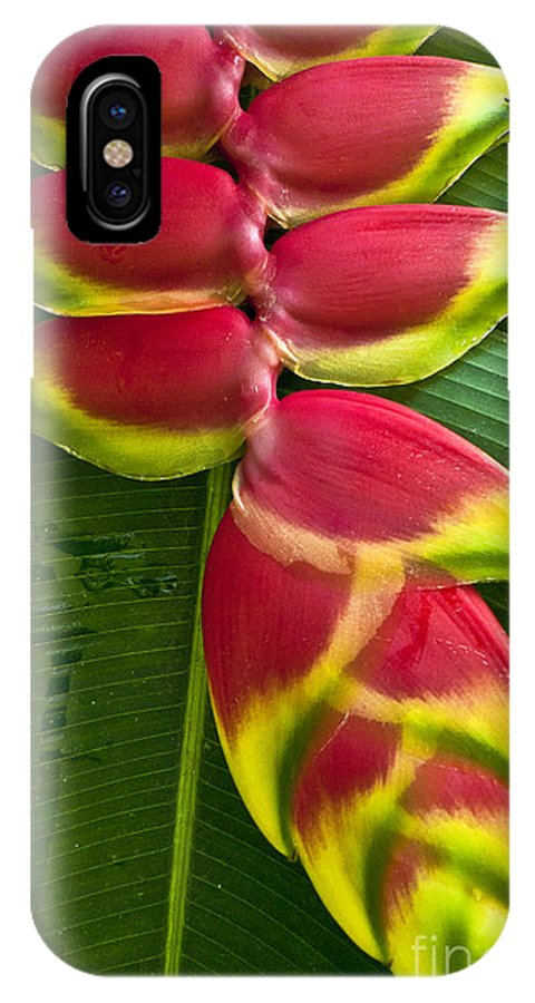 Heliconia IPhone X Case featuring the photograph Heliconia Rostrata II by Heiko Koehrer-Wagner