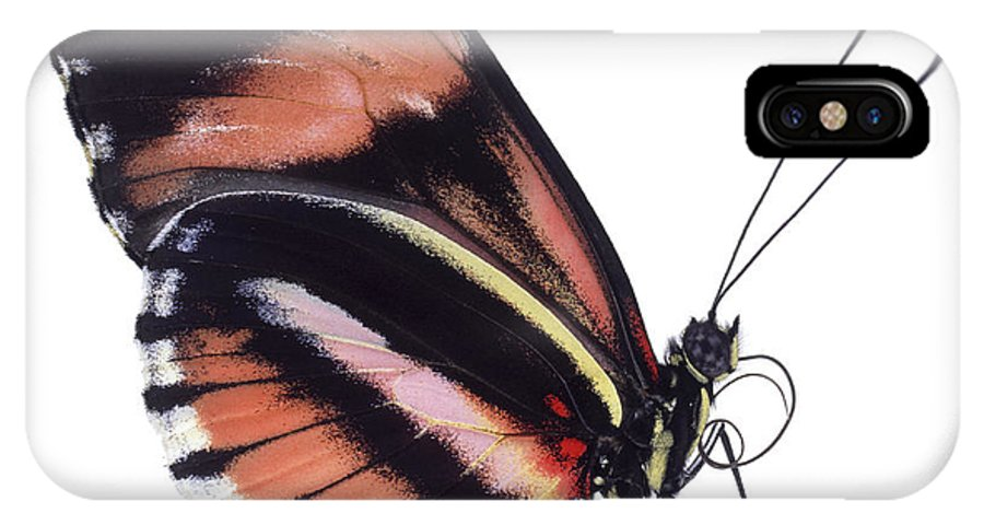 Npl IPhone X Case featuring the photograph Heliconius Butterfly Heliconius Sp by Kim Taylor