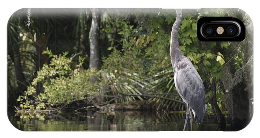 Avian.nature IPhone X Case featuring the photograph Heron Overlord by Jack Norton