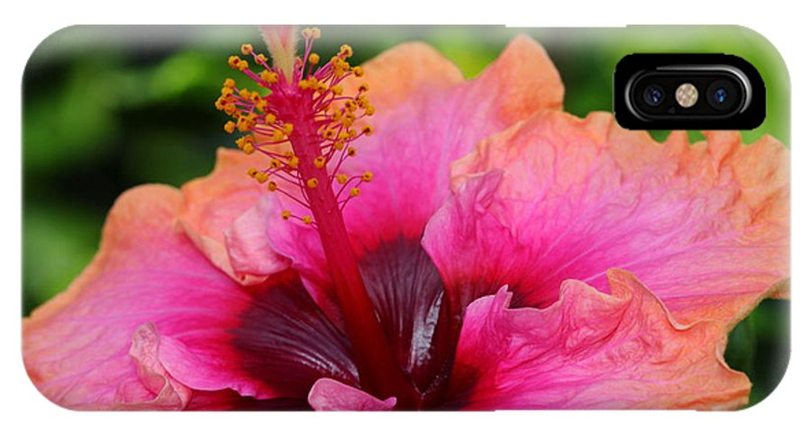Flower IPhone X Case featuring the photograph Hibiscus Love by Paul Slebodnick