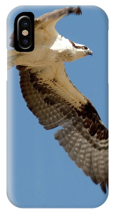 Osprey IPhone X Case featuring the photograph High Flyer by Brent L Ander