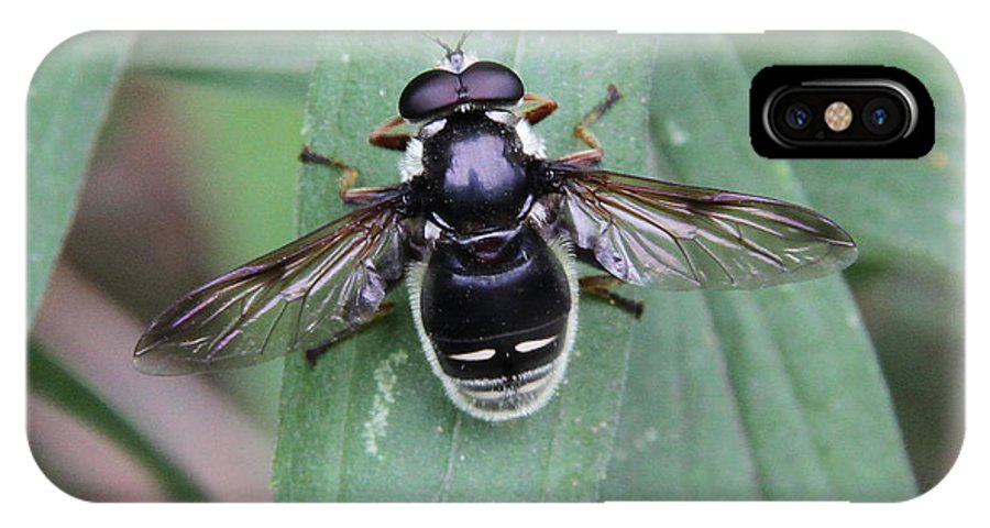 Flower Fly IPhone X Case featuring the photograph Highly Polished by Doris Potter