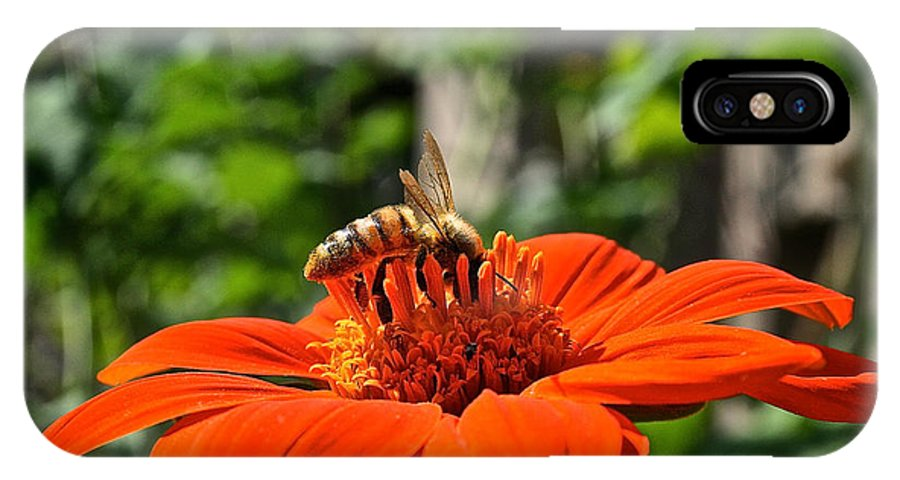 Outdoors IPhone X Case featuring the photograph Honey Bee by Susan Herber