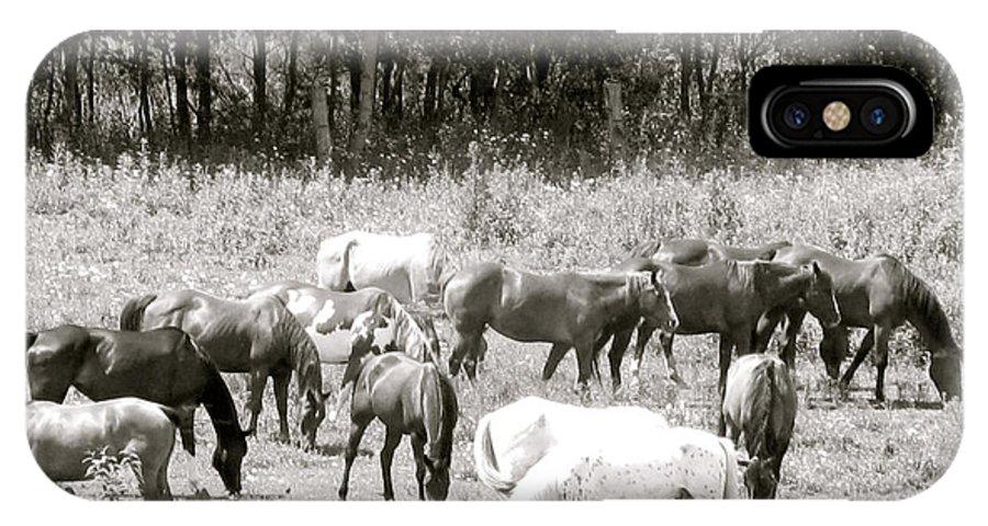 Horse Around IPhone X Case featuring the photograph Horse Around by Debra   Vatalaro