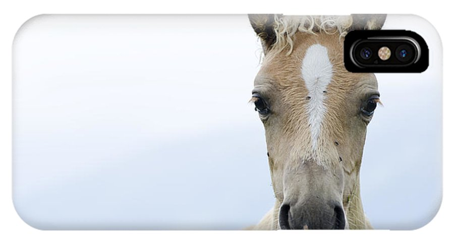 Horse IPhone X Case featuring the photograph Horse Foal by Mats Silvan