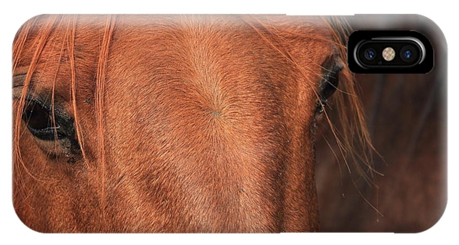 Horse IPhone X Case featuring the photograph Horse Hide by Jim Sauchyn