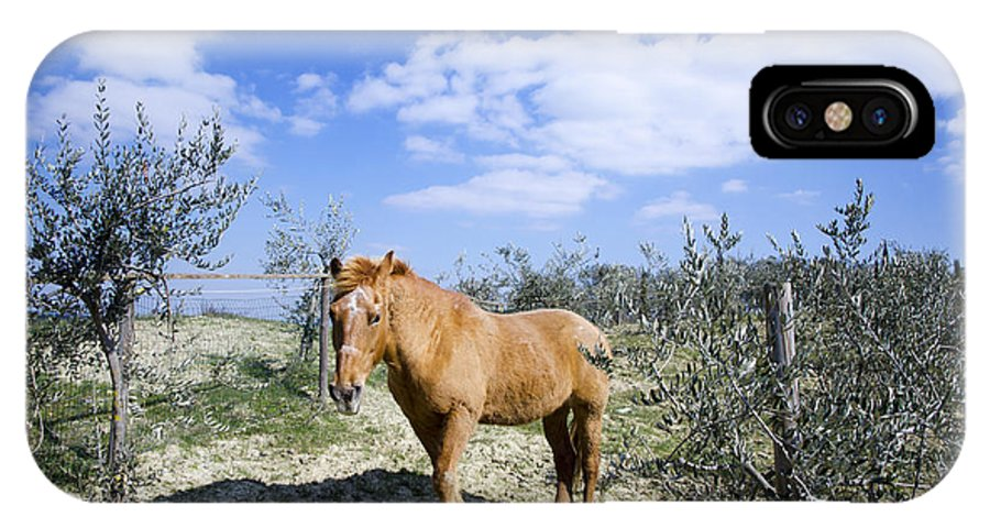 Horse IPhone X Case featuring the photograph Horse by Mats Silvan