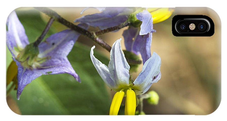 Solanum Carolinense IPhone X Case featuring the photograph Horse Nettle Nightshade - Solanum Carolinense by Kathy Clark