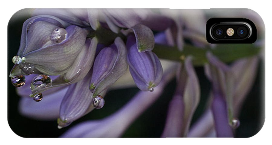 Hosta IPhone X Case featuring the photograph Hosta Blossoms With Dew Drops 6 by Douglas Barnett