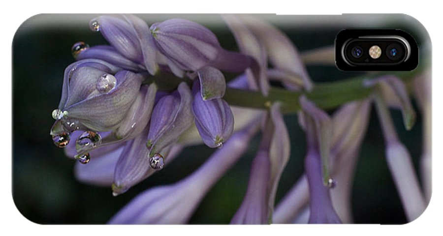Hosta IPhone X Case featuring the photograph Hosta Blossoms With Dew Drops by Douglas Barnett
