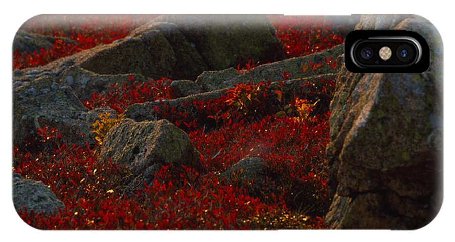 North America IPhone X Case featuring the photograph Huckleberry Bushes And Multi-hued by Michael Melford