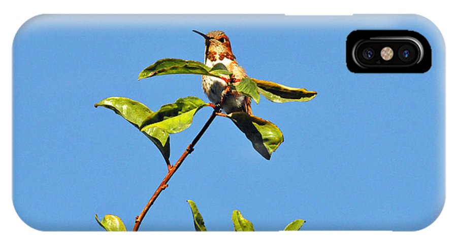 Hummers IPhone X Case featuring the photograph Hummer Up High by Lynn Bauer