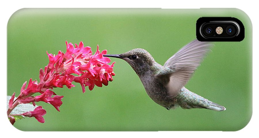 Hummingbird IPhone X Case featuring the photograph Hummingbird And Currant by Angie Vogel